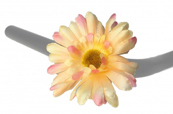 Lenkerblume Chrysantheme