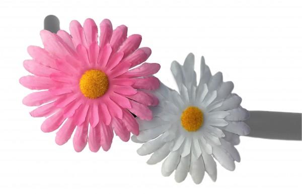Lenkerblume Chrysantheme rosa und weiß